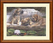 BORDER TERRIER PUPPIES fine art Border Terrier dog print by Lynn Paterson