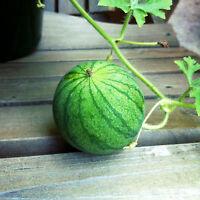 WASSERMELONE 25 Samen Citrullus Lanatus    Wasser Melone