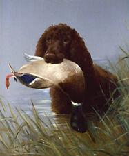 More details for irish water spaniel iws dog art print - duck shooting - by lilian cheviot