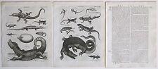 1797 2 Antique Prints Lacerta Cayman Alligator Iguana + Original Article Text