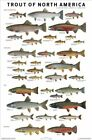 Trout of North America by Joeph R. Tomelleri Chart Educational Poster 24x36