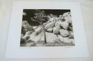Mojave Landscape Joshua Tree - 11x14 Photograph signed Brian Blackwelder - #37