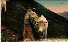 CPA Scénes et Types des Pyrénées Páturage en Montagne (414776)