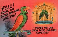 Comic Parrot Lovebirds Come On Down Show These Lovebirds Somethin Postcard