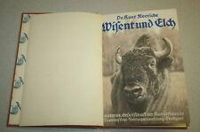Vecchio VASSOIO libro su bisonte europeo, Alce, Bison, stile di vita, caccia, 1930