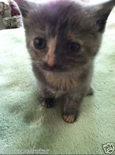 SPONSOR FEED VET PEANUT KITTEN FERAL CAT RESCUE Rec COLOR PHOTO NON PROFIT