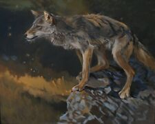 Coyote Original Oil Painting Wildlife Marla Epstein