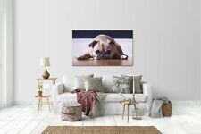 Wandtattoo Wandsticker Aufkleber Hund V3 Grösse: 120 x 70 cm