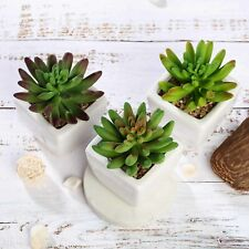 """3 Green 4"""" Assorted Faux Succulent Crassula Plants with Off White Ceramic Pots"""