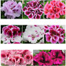 35pcs Geranium seeds Pelargonium hortorum 7 Color Available Balcony Garden Plant