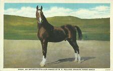Arabian Horse Nasik Pomona California 1915 Postcard