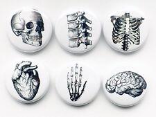 Handmade Anatomy 1 inch Magnets graduation gift doctor nurse med school student