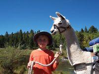 5 ACRES COLORADO LAND  SAN LUIS VALLEY NO RESERVE FINANCING AVAILABLE.