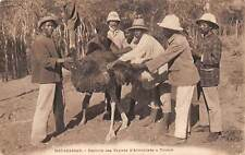 Madagascar ~ Workers Collecting Ostrich Plumes ~ c. 1904-14