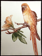 """Catherine O'Connor """"Heathcliff"""" Hand Signed Fine Art Etching of tropical parrot"""