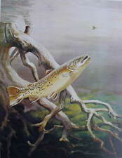 Brown Trout by Bob Hines vintage art