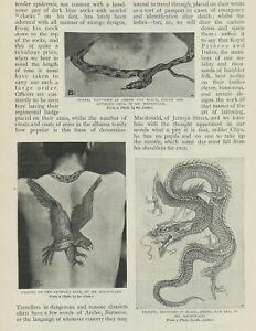 TATTOO - MACDONALD TATTOOIST 1897 PHOTO ARTICLE ON TATTOOING BODY ART TATTOOS