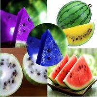 50Pcs Watermelon Fruit Seeds Rare 5 Kind Color Bonsai Sweet Juicy Garden