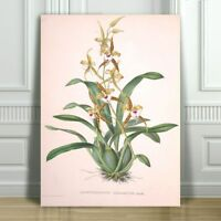 """JEAN LINDEN - Beautiful Yellow & Red Orchid #7 - CANVAS ART PRINT POSTER -36x24"""""""