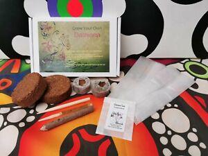 Grow Your Own Damiana Kit - Turnera Diffusa, eco gift, medicinal herb