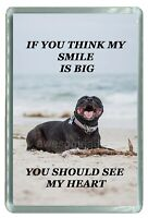 Funny Dog Cute Pit bull- Quality Photo Fridge Magnet 3'' x 2''