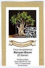 BONSAI-Ficus benghalensis-Banyan-Albero (20) semi