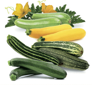 Seeds Zucchini Courgette Squash Summer Mix Vegetable Organic Heirloom Ukraine