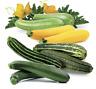 Seeds Zucchini Courgette Squash Summer Mix Vegetable Organic Heirloom Ukraine