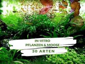 In-Vitro Aquarium Pflanzen & Moose - 30 Arten für Aquascaping & Garnelenaquarien