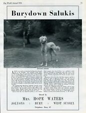 SALUKI DOG WORLD 1954 DOG BREED ADVERT PRINT PAGE BURYDOWN KENNELS