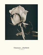 Thomas horbett ROSE poster stampa d'arte immagine 58x46cm