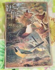 Création Affiche scolaire Set de Table 42x30 cm Troglodyte Mignon Bergeronnette