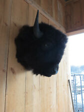 Buffalo head mount/taxidermy/bison/real