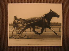 "Champion Standardbred Race Horse ""Little Pat"" & Charles Lacey Vintage Photo"
