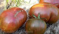 10 graines de tomate rare Pink Berkeley Tie Dye d'une beauté extraordinaire