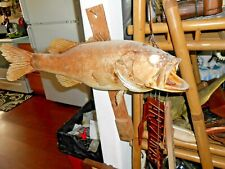 """Vtg Antique Taxidermy Large Big Mouth Bass appx 20"""" Mounted"""