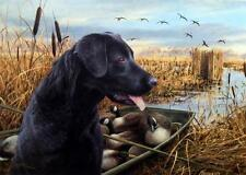 "James Killen ""The Empty Blind"" SN Lab Canadian Goose Print"