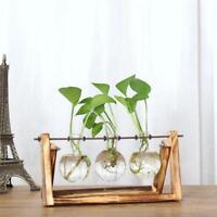 Creative Hydroponic Plant Transparent Vase Wooden Frame Coffee Shop Room Decr
