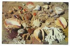 Vintage Florida Chrome Postcard Seashells Shells From The Coasts Collection