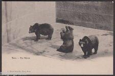 ZOO ANIMALS POSTCARD - Bern - Die Bären (The Bears)