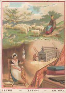 ancien chromo la lana - la laine - the wool