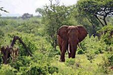 "WANDBILD ""Kenya Wildlife - Elefant"" auf ACRYLGLAS 20 x 30 cm"