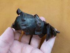 (s800-20) Horn Shark egg case casing Heterodontus educational love sharks Mexico