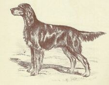 Gordon Setter - Vintage Dog Print - 1954 Megargee