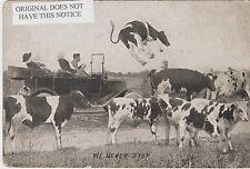 Auto Hits Cow, Humorous, 1915