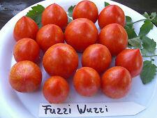 Fuzzi Wuzzi Tomate Tomatensamen 10 Korn Gormettomate absolute Neuheit  Rarität