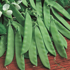 Snow Pea Seeds USA Non GMO Vegetable Asian Chinese Sugar Snap Pod Peas for 2021