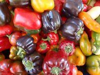 Heirloom Pepper Seed Assortment- 10 Varieties- 700+ Seeds
