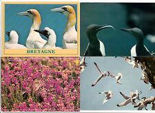 BRETAGNE lot 4 cartes postales oiseaux 1