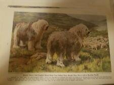E Miner Old English Sheepdog bookplate from 1941 National Geographic Magazine